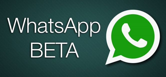 Activating Beta Testing Mode on WhatsApp !